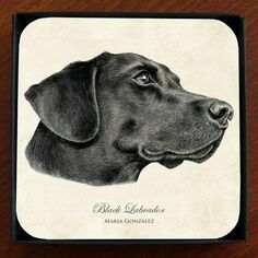 Set of 4 Black Labrador Coasters