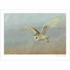 Limited Edition Print by Robert E Fuller - Barn Owl on Lookout