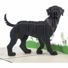 Black Labrador Pop Up Card