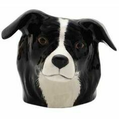 Border Collie Face Egg Cup