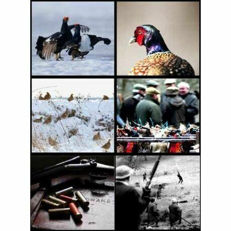 6 Assorted Notecard Pack - Shooting Scenes